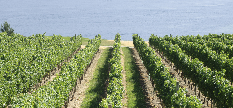 monterey vineyard water