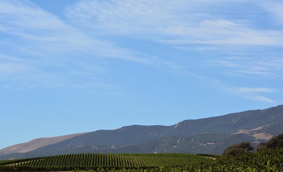Rolling_vineyards